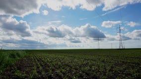 Geräumiges Feld mit den Sojabohnen angebaut und den Stromleitungen stock video