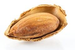 Geröstete almons Lizenzfreies Stockbild