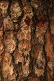Geröstete Barke Stockbild