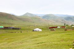 The ger camp in a large meadow at Ulaanbaatar , Mongolia. Ger camp in a large meadow at Ulaanbaatar , Mongolia Royalty Free Stock Photos