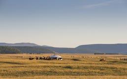 Ger i ett landskap på soluppgång Fotografering för Bildbyråer