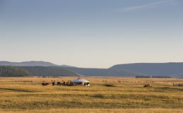 Ger in a landscape at sunrise. Mongolian ger in a landscape of northern Mongolia Stock Image