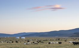 Ger in a landscape at sunrise. Mongolian ger in a landscape of northern Mongolia Royalty Free Stock Photo