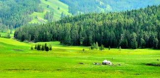 GER sull'erba al bordo della foresta Immagini Stock Libere da Diritti