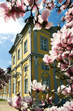 Gera. Baroque building in the city of Gera with magnolia tree and blossoms Royalty Free Stock Photography