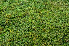 Gerade Bäume Lizenzfreies Stockfoto