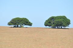 Gerade Bäume Stockfotografie