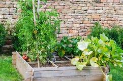 Gerade bewirtschaftend, Gemüsegarten Stockbilder