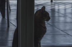 Gerade eine Katze, die weg schaut stockfotos