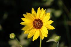 Gerade eine recht gelbe Blume stockfotografie
