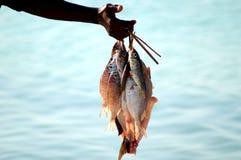 Gerade gefischt Stockbilder