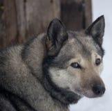 Gerade Hund im Winter Lizenzfreie Stockbilder