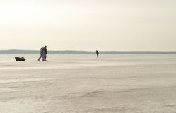 Gerade liegt aufgefangenes zander auf Eis Stockfoto