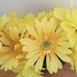 Gerade mein reizendes Gelb Lizenzfreie Stockfotos