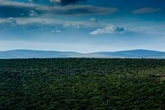 Gerade schöner Addo Landscape Lizenzfreie Stockfotografie