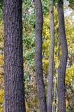 Gerade sind wenige Bäume nicht Wald noch Stockbild
