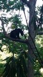 Gerade, sitzend in einem Baum Stockbild