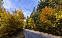 Gerade Straße und farbige Blätter auf Bäumen Lizenzfreie Stockfotos