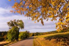 Gerade Straße und gelbe Blätter des Baums Stockfotos