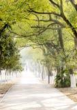 Gerade Straße unter Bäumen Lizenzfreies Stockfoto