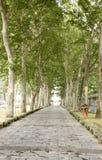 Gerade Straße unter Bäumen Lizenzfreies Stockbild