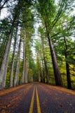 Gerade Straße im wilden Wald mit hohen Herbstbäumen Stockfotografie