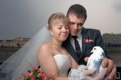 Gerade verheiratetes Paar mit weißer Taube Stockbild
