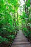 Gerader Gehweg in Dschungel Stockbild