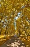 Gerades footpat zwischen Bäumen des strahlenden Golds Stockbilder