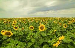 Geradores de vento no campo dos girassóis Imagens de Stock Royalty Free