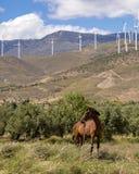 Geradores do cavalo e de vento, sempre trabalhando, energia limpa que contrasta com a paisagem Cavalo no primeiro plano imagens de stock royalty free