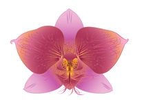 Geraffineerde orchidee Royalty-vrije Stock Afbeeldingen