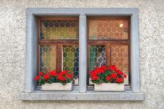 Gerani rossi in scatola di finestra Immagini Stock