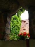 Gerani in una finestra di pietra, Croazia immagini stock