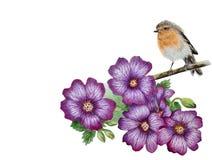 Geranio lilla di fioritura e un uccello del pettirosso illustrazione di stock
