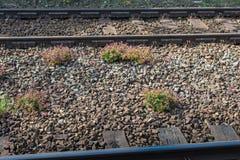 Geranio macchiato che cresce fra le piste del treno Fotografia Stock Libera da Diritti