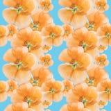 Geranio, pelargonium Struttura senza cuciture del modello dei fiori flor Fotografia Stock