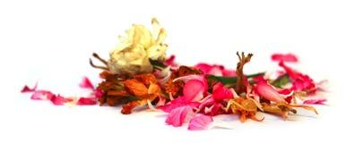 Geranio, petunia, flores delicadas secas, hojas y pétalos de las RRPP fotografía de archivo libre de regalías