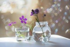 Geranio y cardo en floreros dentro en un fondo soleado Imagen de archivo libre de regalías