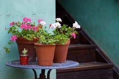 Geranios en conserva en la mesa redonda al lado de las escaleras del patio Fotografía de archivo libre de regalías