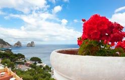 Geranios rojos con Faraglioni en el fondo, isla de Capri Fotografía de archivo libre de regalías