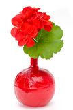 Geranium in blood. Geranium flower and leaf in a red liquid filled bottle royalty free stock photography