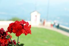 Geranium church Stock Photo