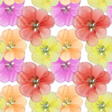 Geranium, cranesbill, pelargonium. Seamless pattern texture of p Royalty Free Stock Images