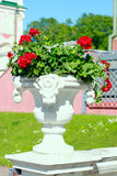 Geranium in a decorative pot Stock Photos