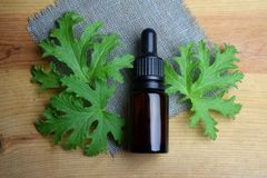 Geranium essential oil Aromatherapy anti mosquito stock photos