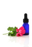 Geranium Flower Essence. Pink geranium flower with an aromatherapy essential oil blue glass dropper bottle, over white background royalty free stock photos