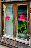 Geranium. Flower geraniums outside the window Royalty Free Stock Photos