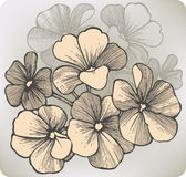 Geranium flower, hand-drawing. Vector illustration Stock Photography