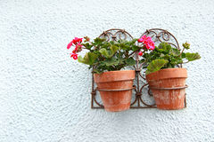 Geranium in the flower pots Royalty Free Stock Images